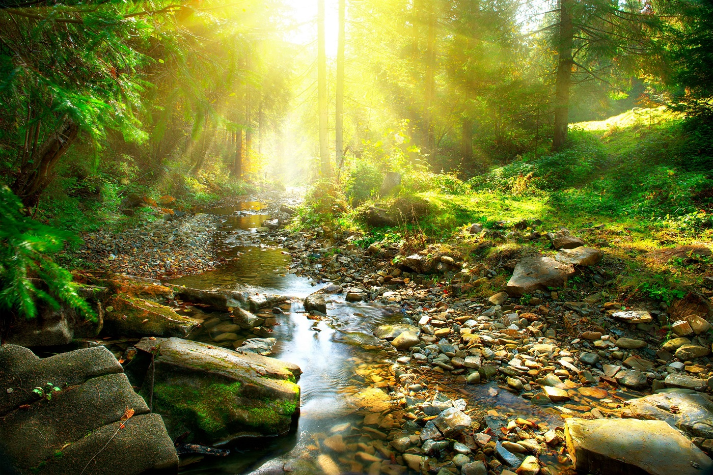 Premium Bio Naturprodukte & Rohstoffe