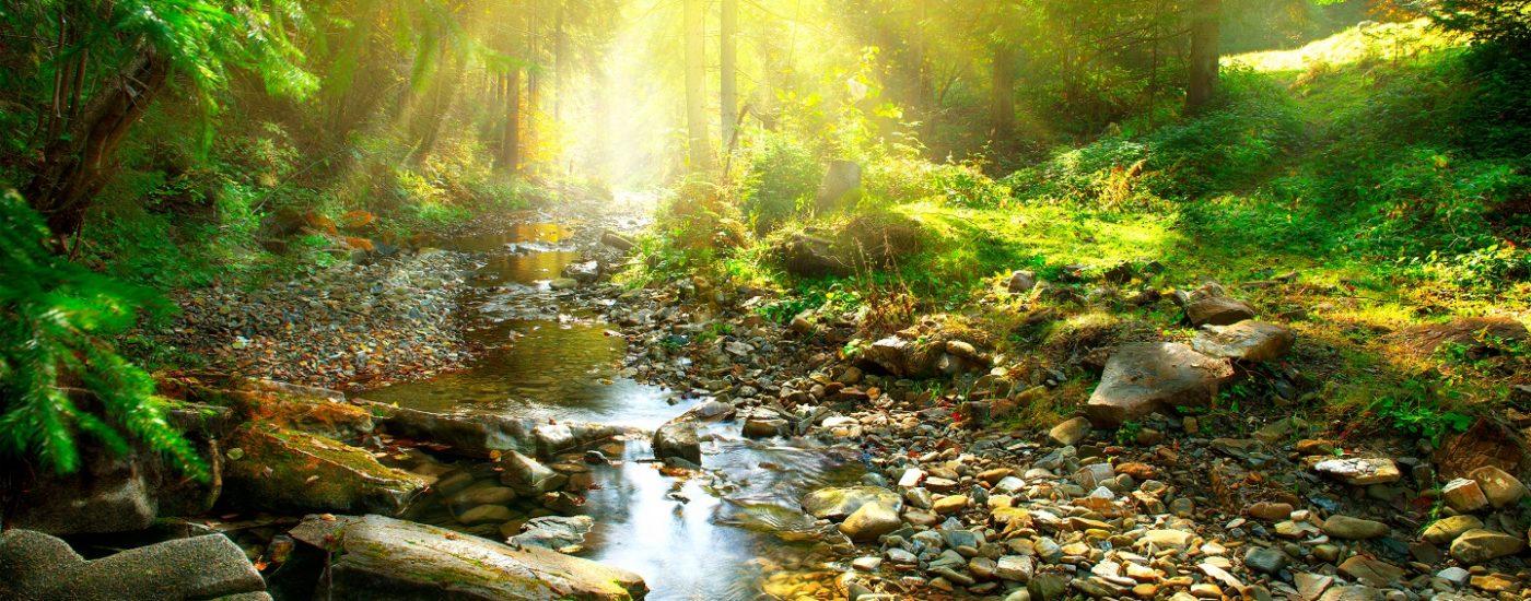 Naturra Premium Biologische Rohstoffe und Naturprodukte